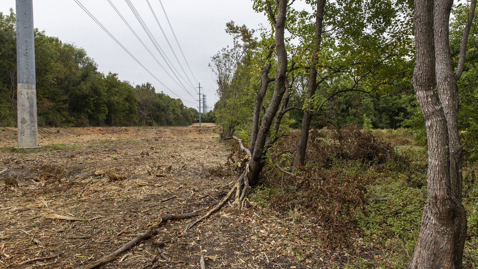 Mulched debris was all that remained Monday on a 3-acre stretch of Oncor right-of-way property within the Old Fish Hatchery nature area at the south end of White Rock Lake in Dallas.