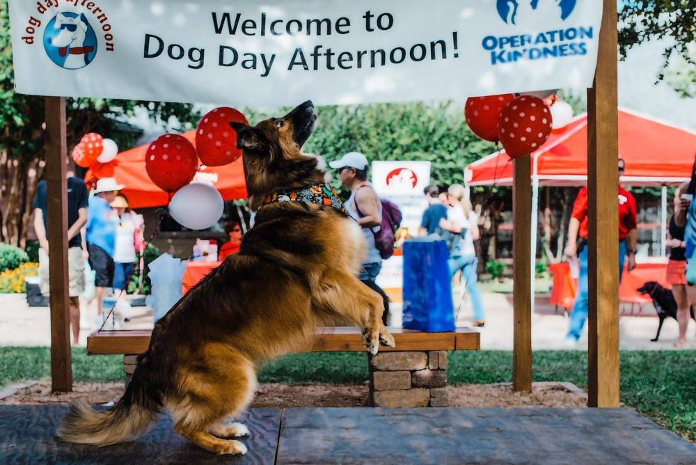 Four-leggers can show off their tricks and costumes Saturday during the contests at Dog Day Afternoon.