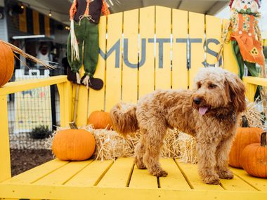 Mutts Canine Cantina's Pupsgiving celebrations include photos.