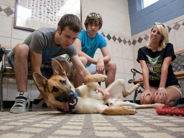 Roy Gardenhire (from left), Trevor Patton and Robin Wooten get to know a German shepherd available for adoption at the Richardson Animal Shelter.