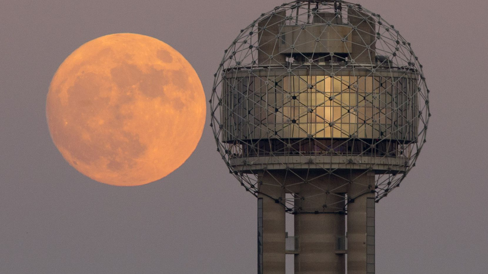 The Supermoon alongside Reunion Tower in downtown Dallas, Sunday evening, November 13, 2016. It will be appear to be larger and brighter in the night sky than it has in nearly 70 years because the point of its orbit is closest to Earth. The last time it passed this close was Jan. 26, 1948.