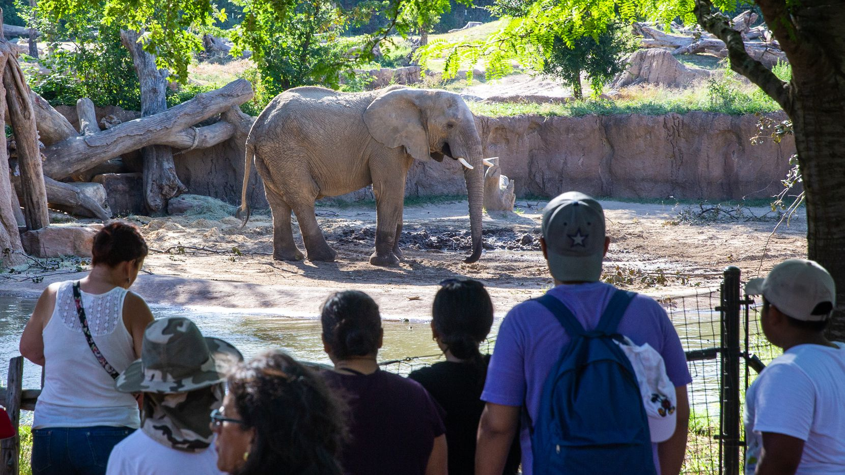 Families with children watched an elephant at the Dallas Zoo on July 18, 2019.