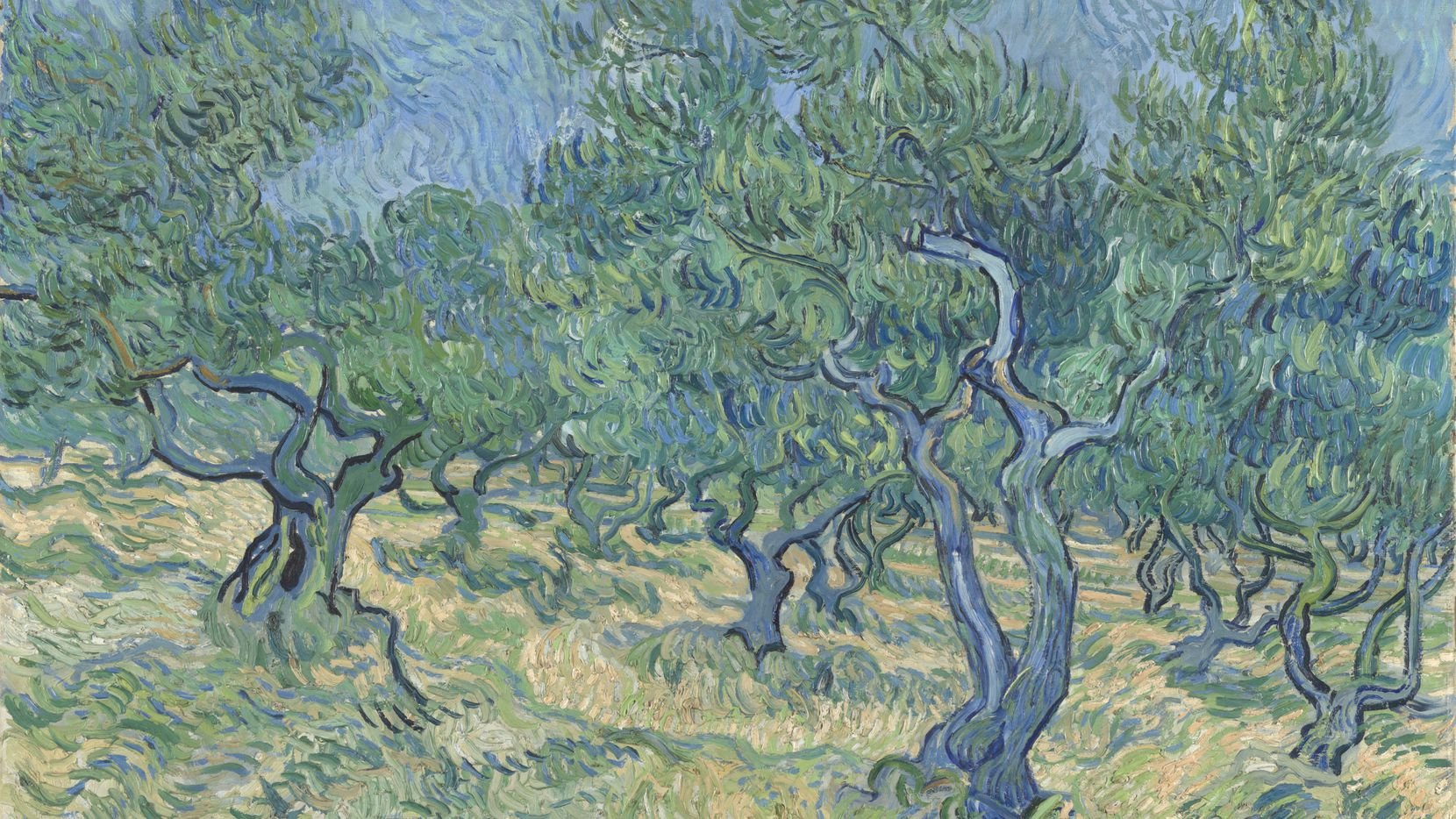 """Vincent van Gogh, Olive Grove, July 1889, oil on canvas. The work is part of the exhibit """"Van Gogh and the Olive Groves,"""" on view at the Dallas Museum of Art from Oct. 17, 2021, through Feb. 6, 2022."""