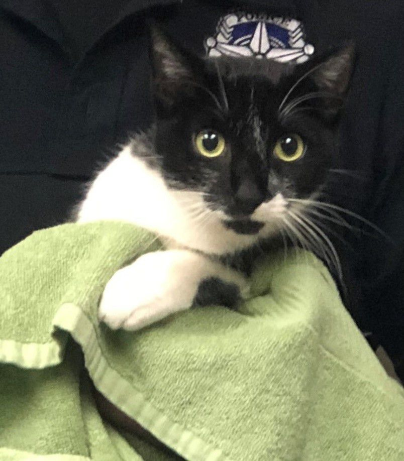 A cat was found with a gunshot wound in the 2100 block of S. Woody Road in Dallas on Oct. 23, 2020. Police are looking for a suspect in the animal cruelty case.