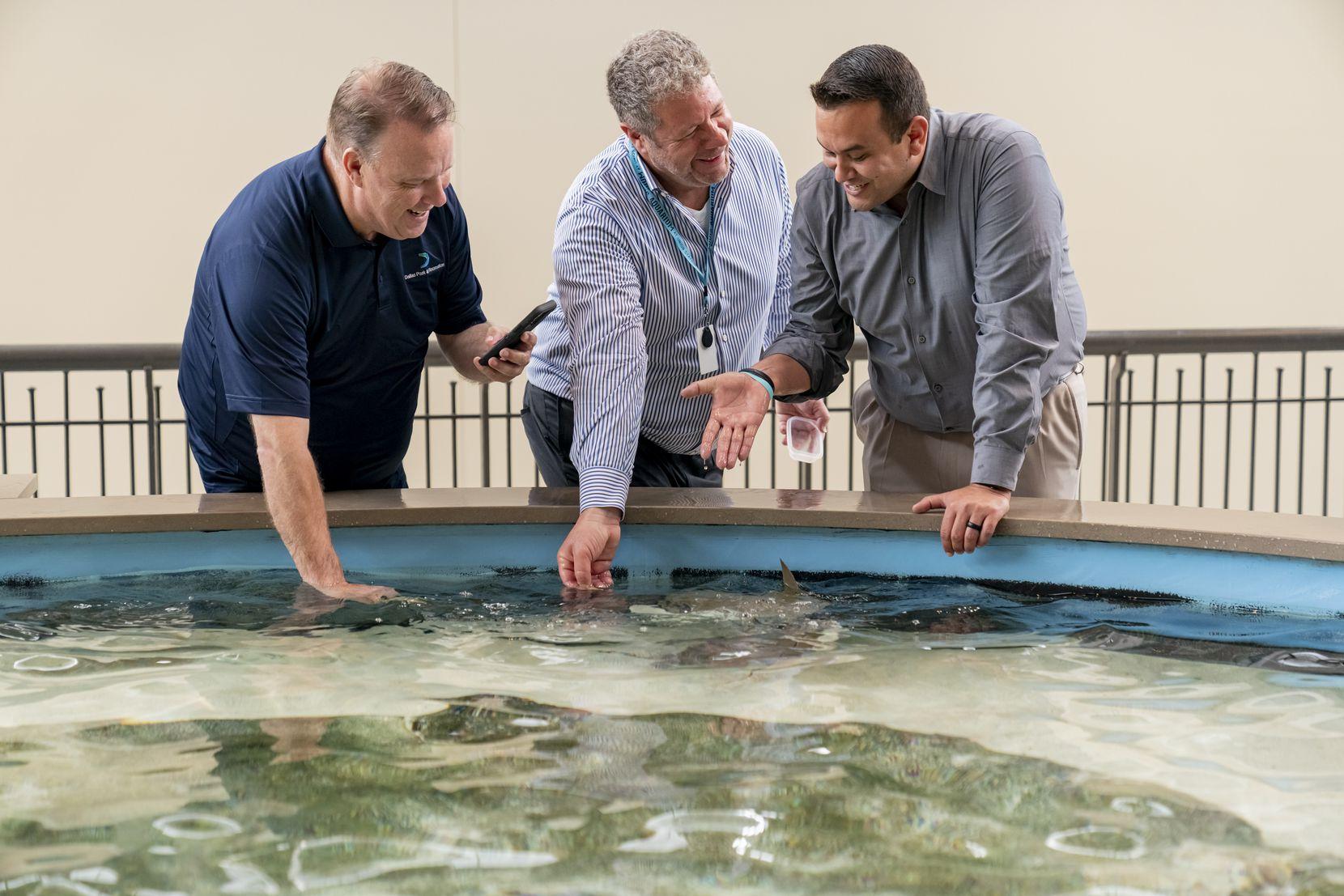 From left, Dallas Park Board member Daniel Wood, zoOceanarium Group managing director Chris Davis and Dallas City Council member Adam Bazaldua touch stingrays during a tour of the St. Louis Aquarium at Union Station on Wednesday.