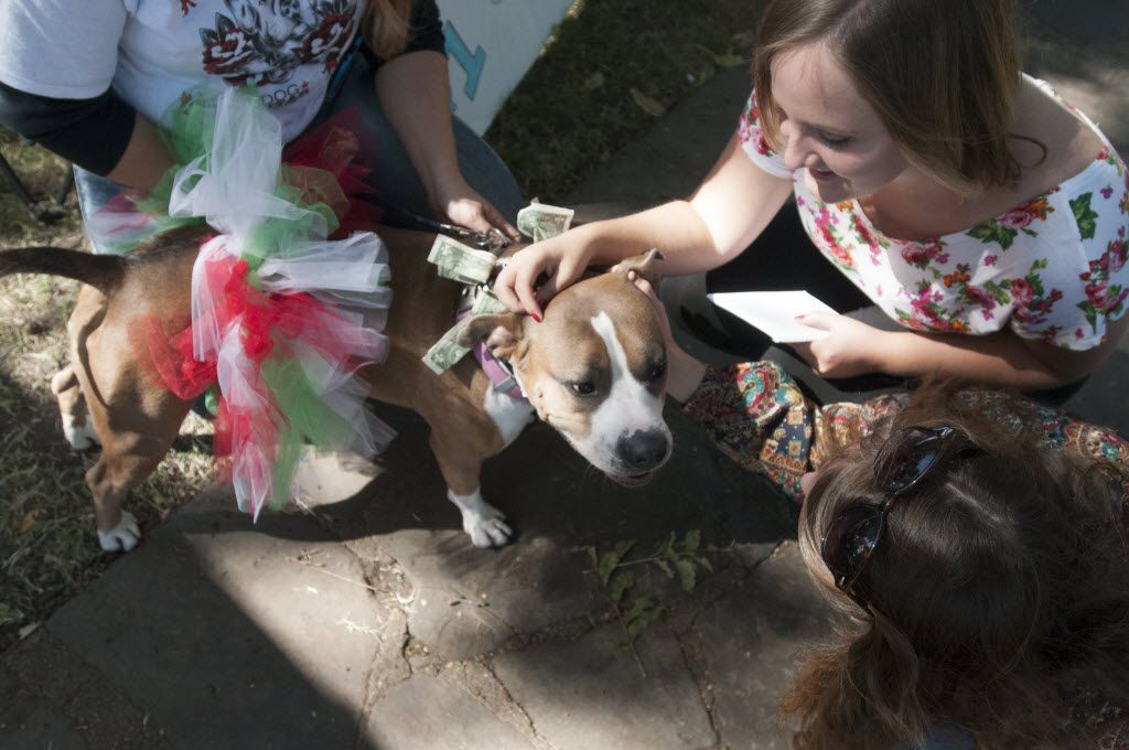 Kayla Highsmith (top right) and Susannah Woodruff stopped to pet Abby, a pit bull whose handler was offering kisses from her for $1, during a previous Texas Veggie Fair.  (Rex C. Curry/Special Contributor)