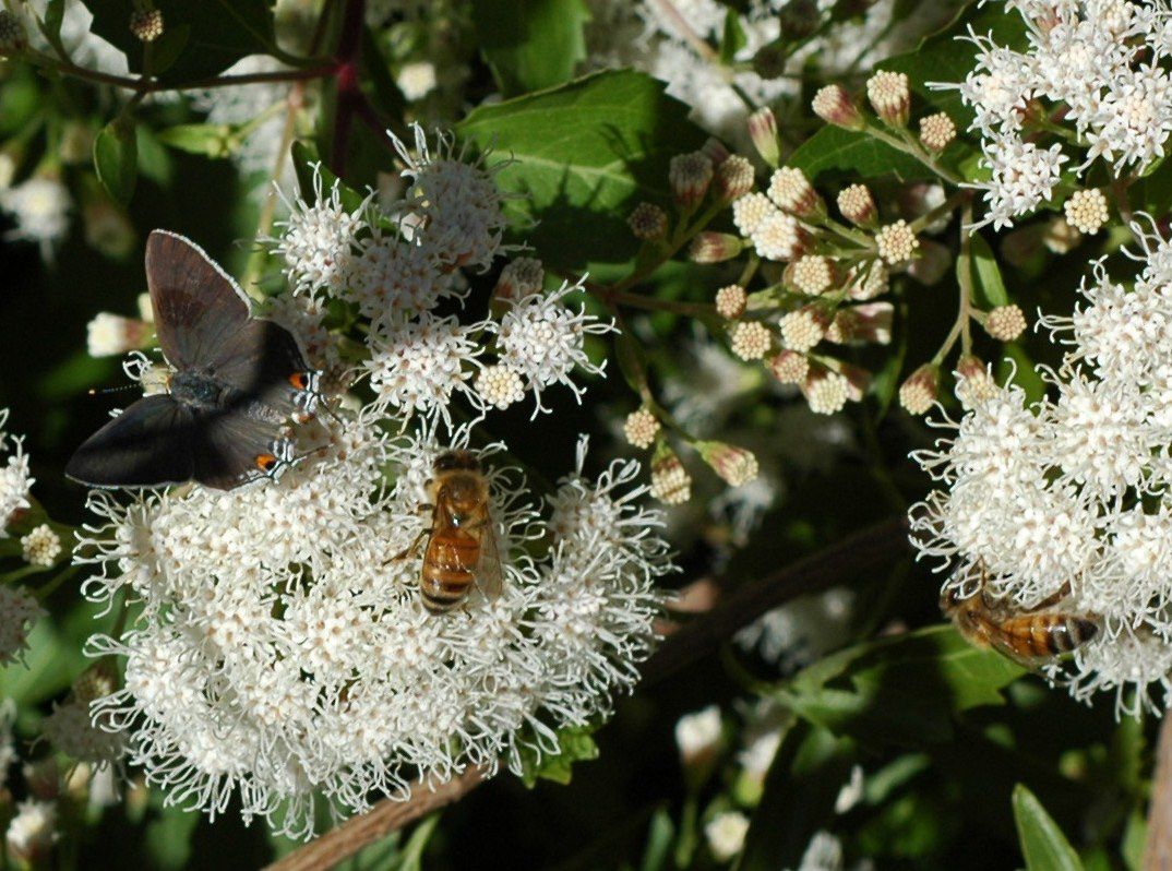 Encourage biodiversity in your garden to help with pest control.