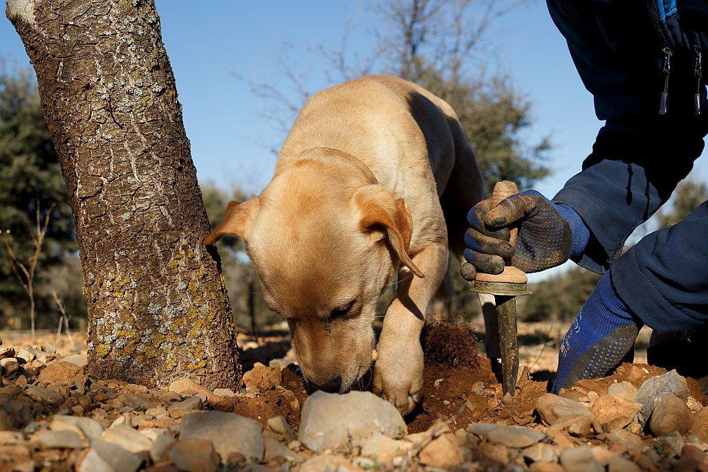 Los perros hacen hoyos por instinto pero también por ansiedad.