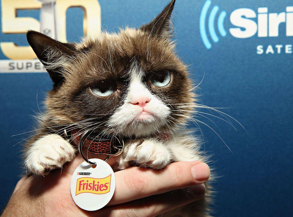 La famosa Grumpy Cat falleció el año pasado. Fue uno de los gatos más famosos de la historia, por su original cara.