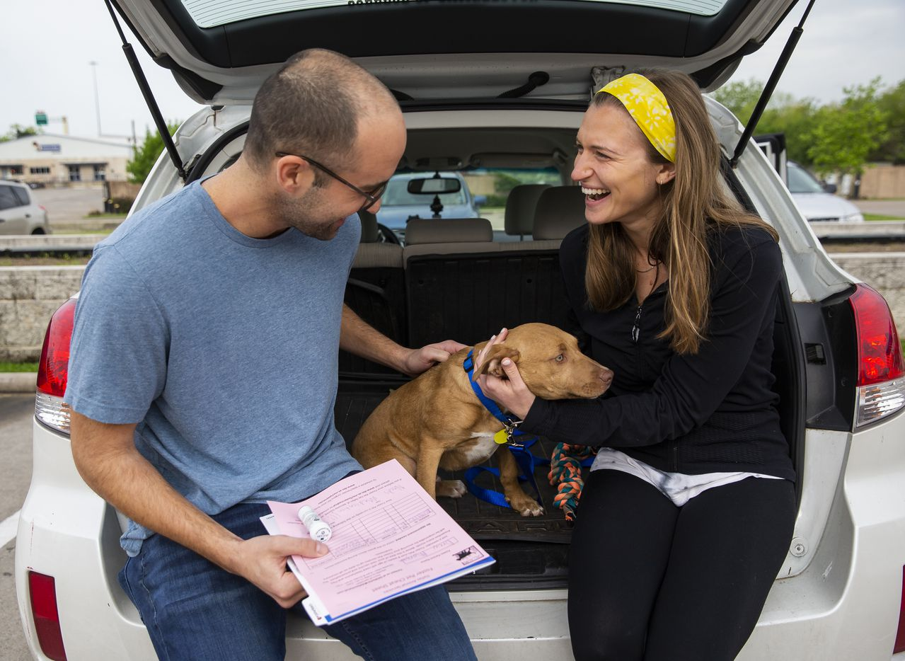 Drew Morgan and Lexi Sorbara, first-time fosters for Dallas Animal Services, picked up five-month-old Biggs Thursday without ever entering the shelter.