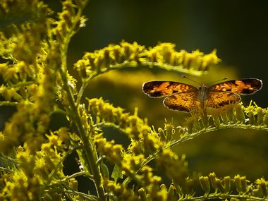 A butterfly is seen along the Primitive Pond Trail at Trinity River Audubon Center on Wednesday.