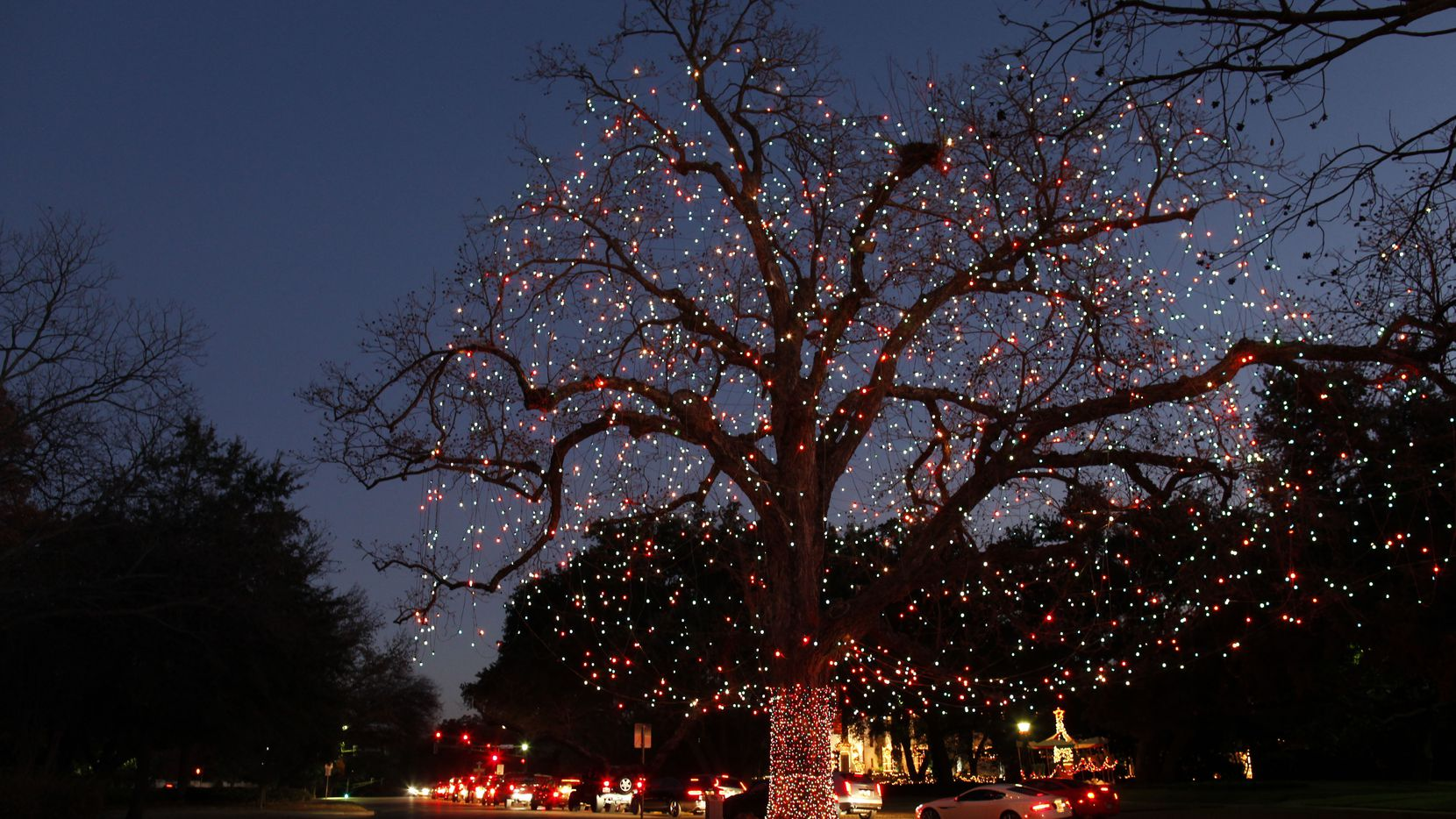 The legendary Big Pecan Tree lived through the Civil War, World War II and many other historic events. It was chopped down due to age starting on Oct. 21, 2019.