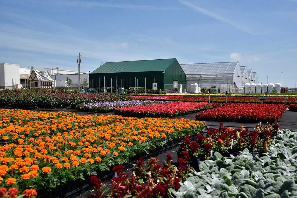 Flower beds that have been moved outside after growing inside the Dallas Arboretum's newest greenhouse, The Tom and Phyllis McCasland Horticulture Center in Mesquite, Friday April 05, 2019.