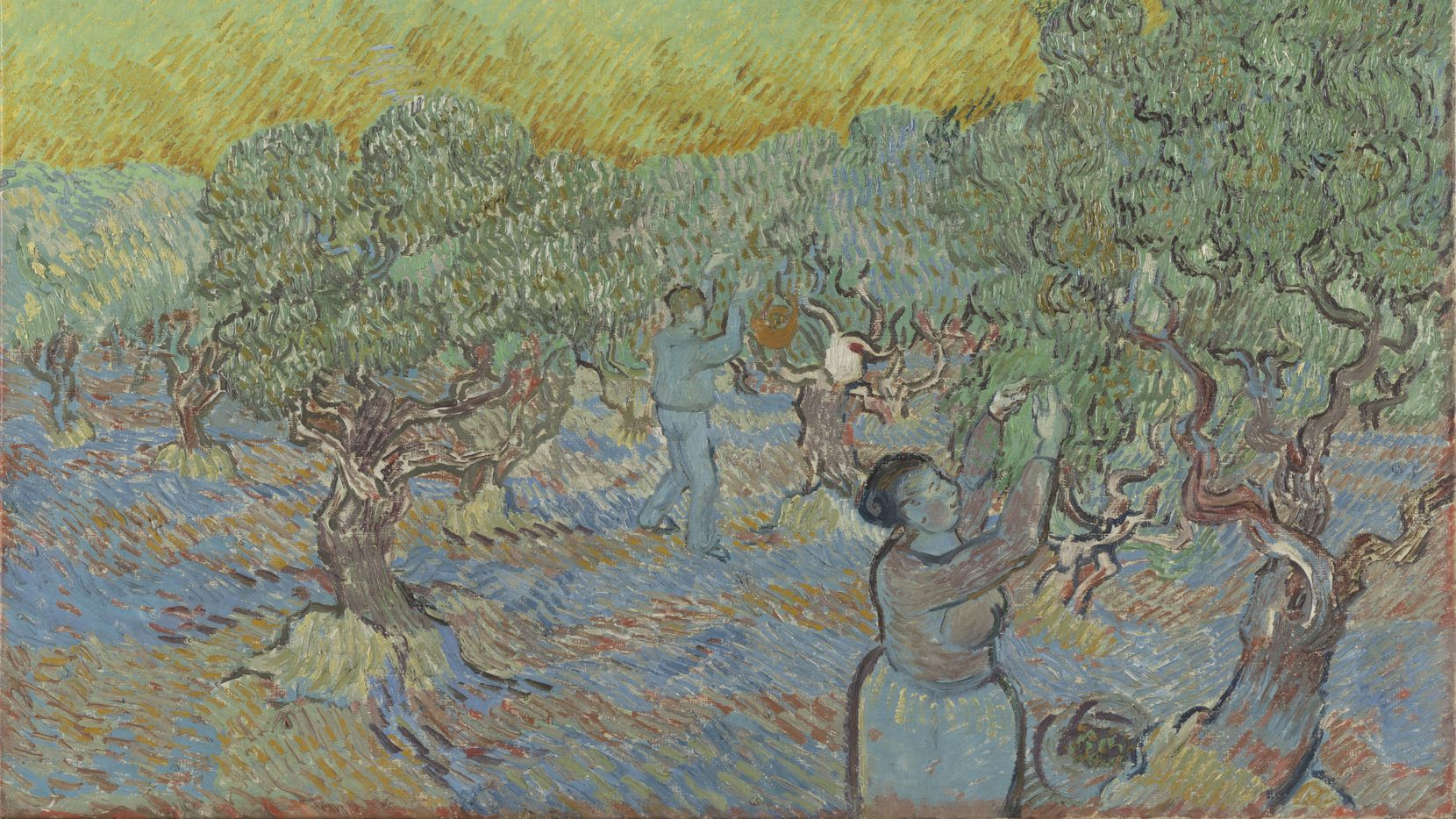 """Vincent van Gogh's 1889 oil-on-canvas work """"Olive Grove with Two Pickers"""" will come to Dallas in the first exhibition to reunite all 15 paintings in the series, which was executed during his stay at the asylum in Saint-Rémy-de-Provence."""