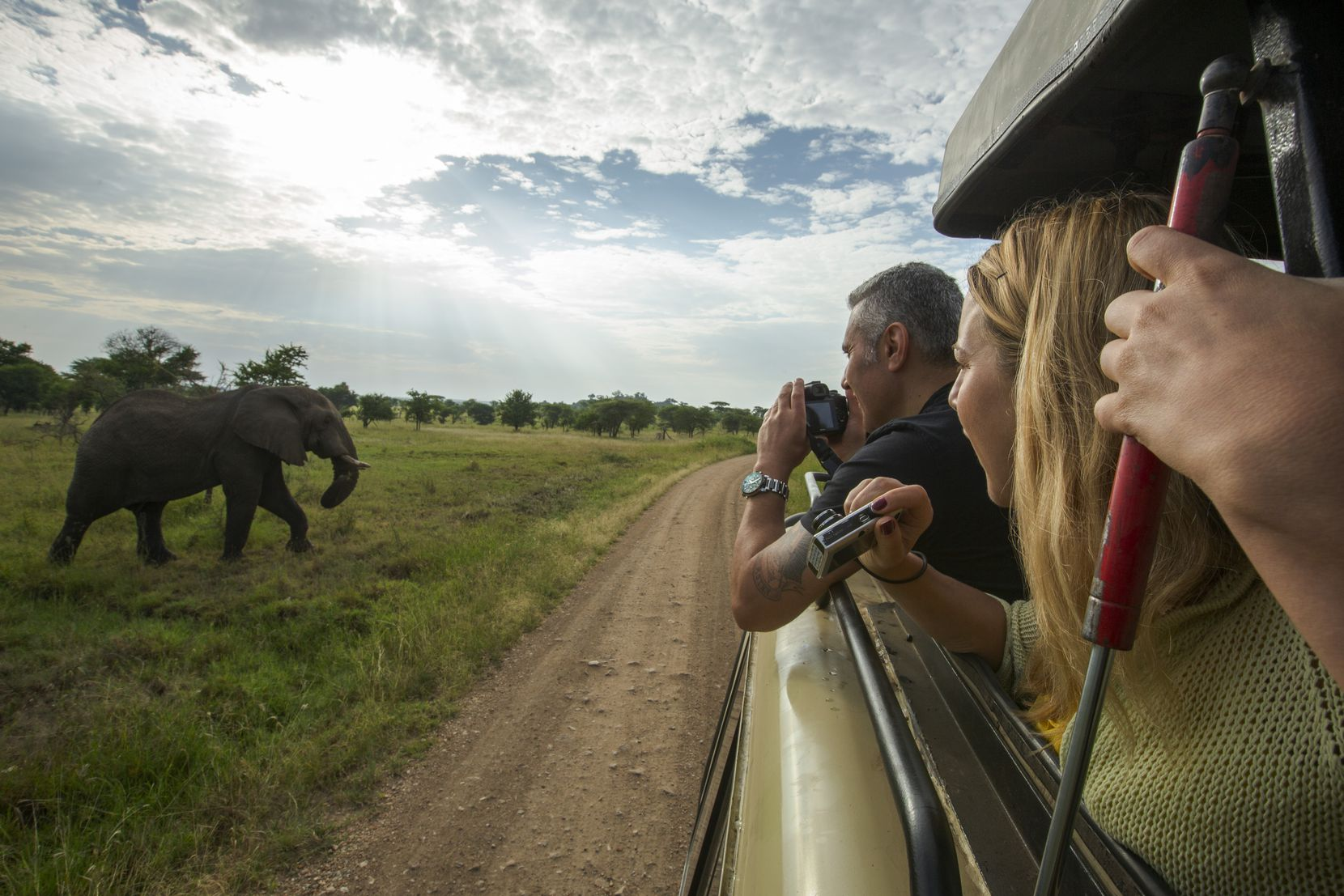 Elephants and other wildlife keep the camera shutters clicking at Serengeti National Park.