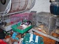 he Humane Society of North Texas rescató más de 200 animales, incluyendo 84 conejos de una casa en el condado de Hill, al sur de Dallas.