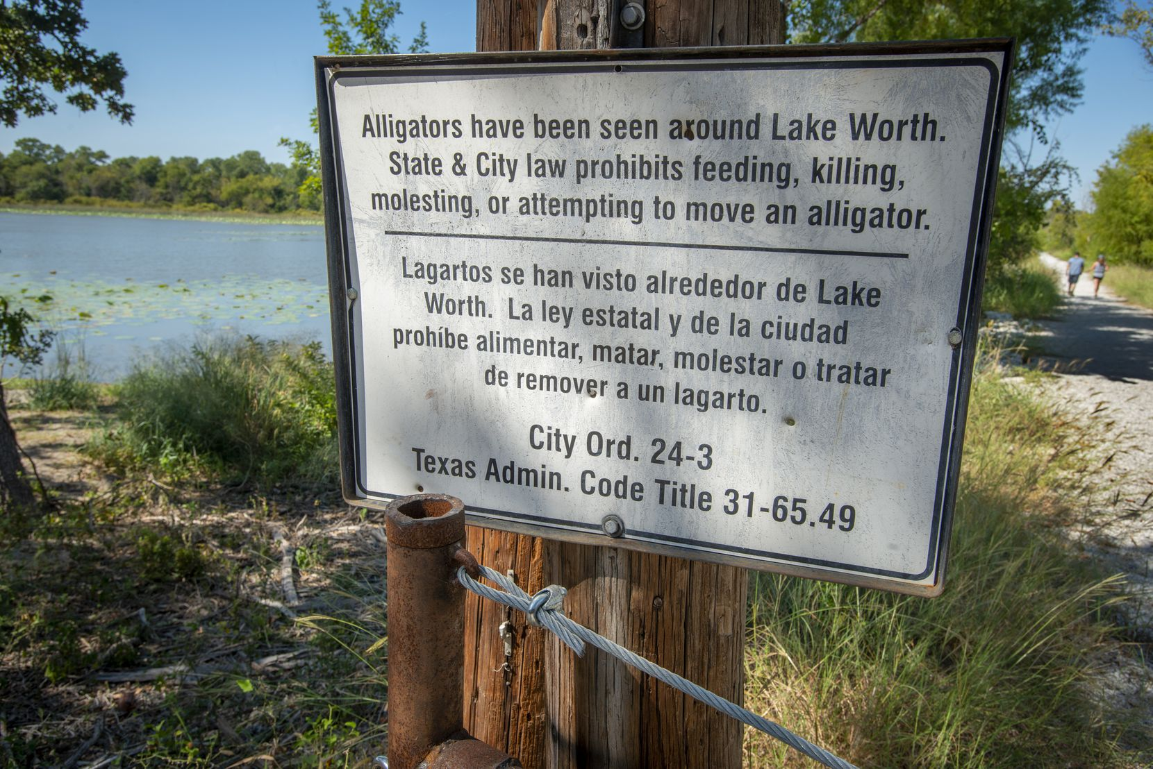 A sign posted at the the Greer Island trailhead warns that alligators may be present at the Fort Worth Nature Center on Lake Worth in Fort Worth, Texas on September 26, 2021. (Robert W. Hart/Special Contributor)