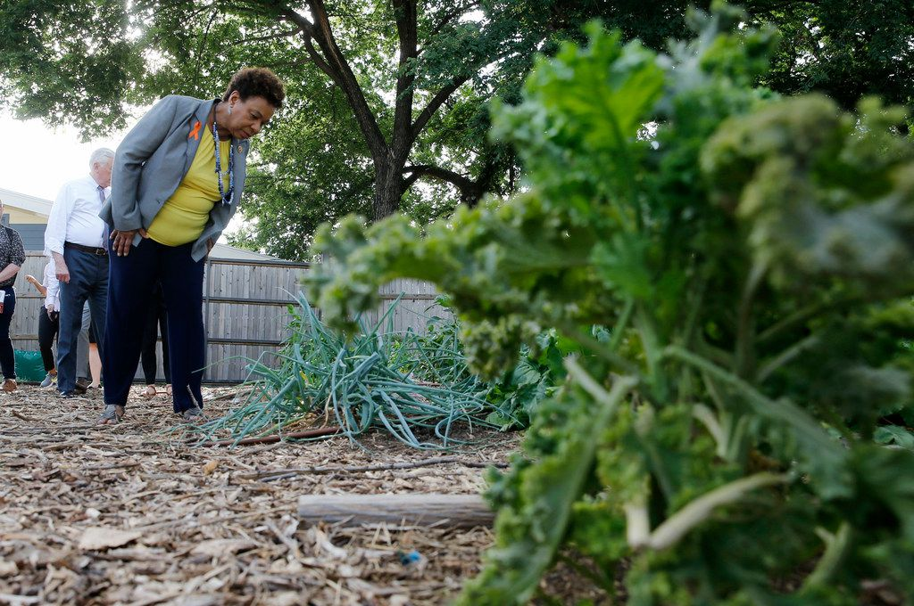 Congresswoman Barbara Lee (CA-13) checks out some of the plants grown at Bonton Farms during a Pathways Out of Poverty Listening Tour in Dallas on Friday, June 1, 2018. The group visited Bonton Farms, Jubilee Park and Community Center and the Promise House in Dallas.
