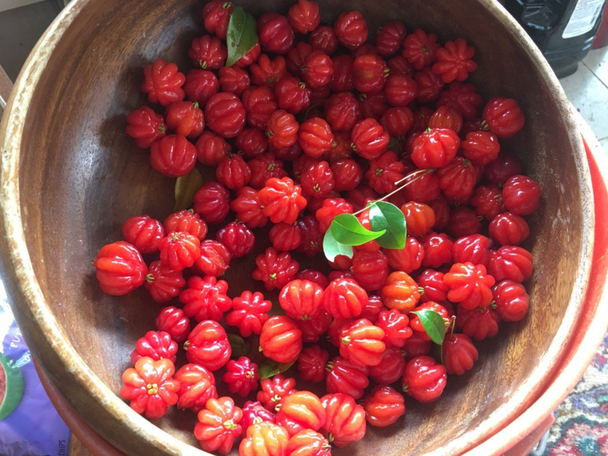 These are Surinam Cherries, a local superfood that grows on Kauhi in spring.