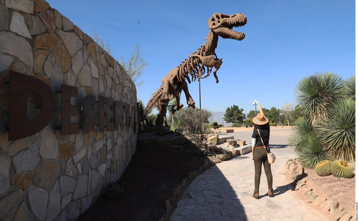Quienes deseen testificar los hallazgos paleontológicos de Coahuila, deben incluir en su itinerario una visita a la zona paleontológica de Rincón Colorado, ubicada en el Municipio de General Cepeda.