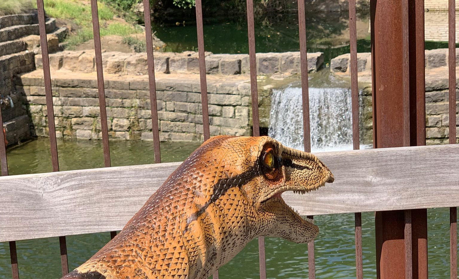 The City of Allen is asking residents to help find Cece, an escaped 53-pound, 205-million-year-old Coelophysis.