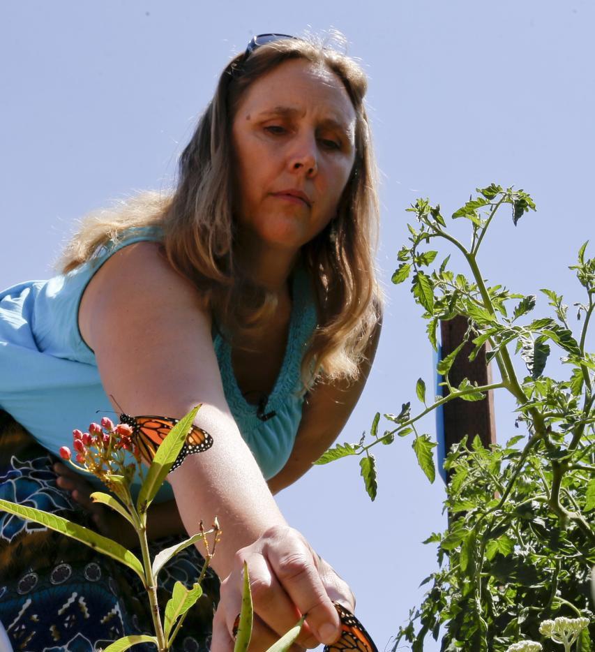 Anya Shortridge sembró algdoncillo en su jardín, lo cual ayuda a recuperar a las mariposas monarca. (AP/GREGORY BULL)