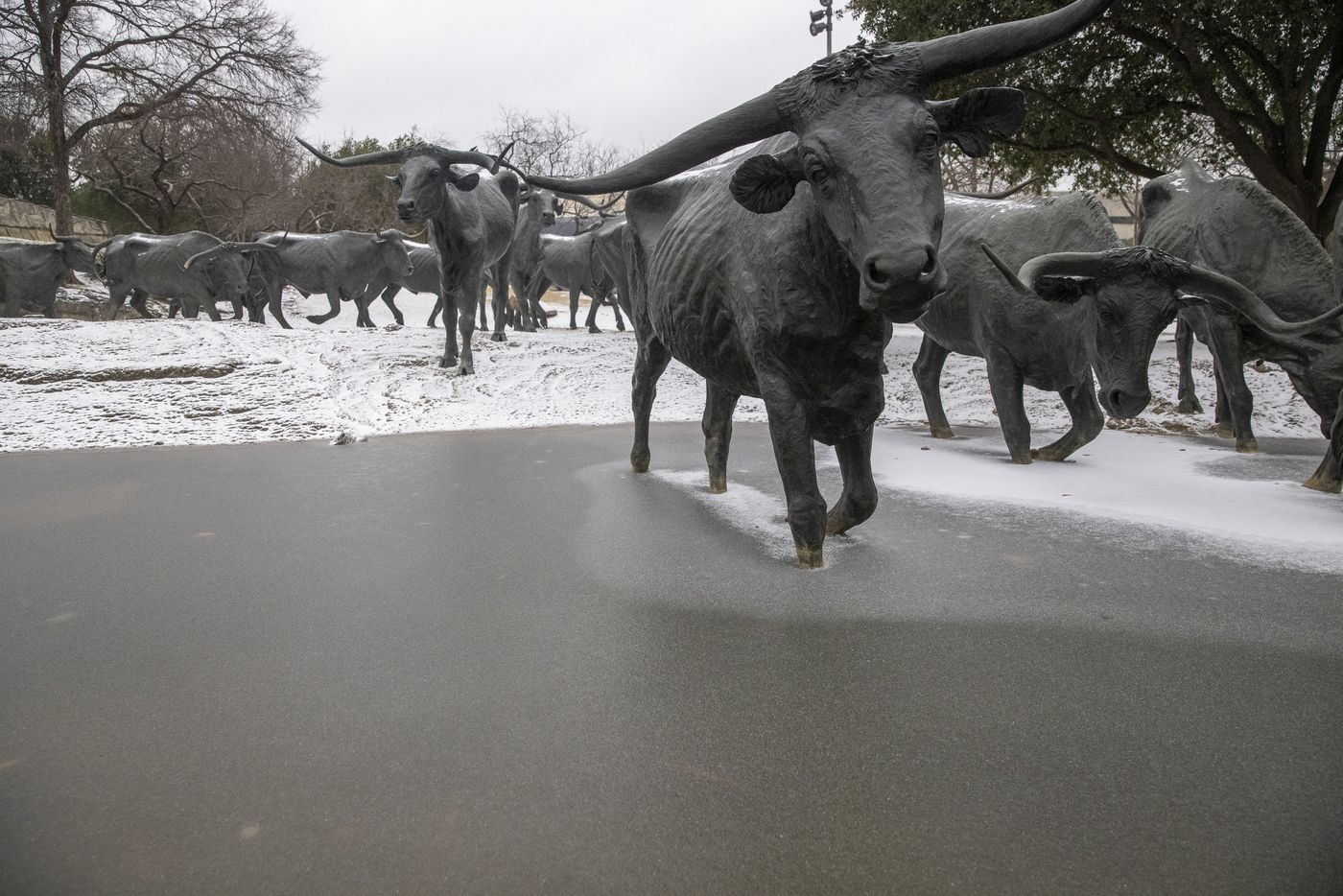 The water is frozen over at the cattle drive statues at The Plaza in front of the Dallas Convention Center in downtown Dallas on Sunday, Feb. 14, 2021, in Dallas. The region is currently under a winter storm warning.