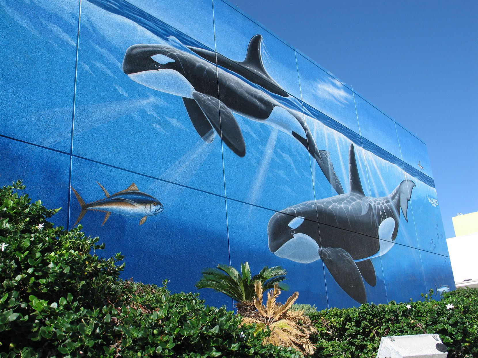 "Another ""Whaling Wall"" at the South Padre Island convention center was created in 1994 by Wyland."