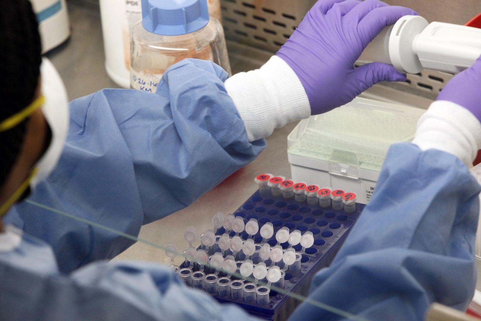 Un microbiólogo muestra pruebas que se realizan a mosquitos en el DHHS. Los mosquitos en Dallas son un desafío para las autoridades de salud. BEN TORRES/AL DÍA