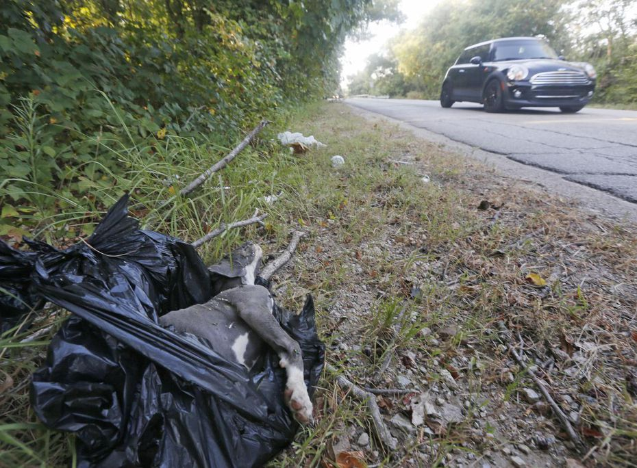 A dog was disposed of in a garbage bag in a ditch along Dowdy Ferry Road in southeast Dallas this summer. The area is often a dumping ground for trash, old appliances and animals, dead and alive.