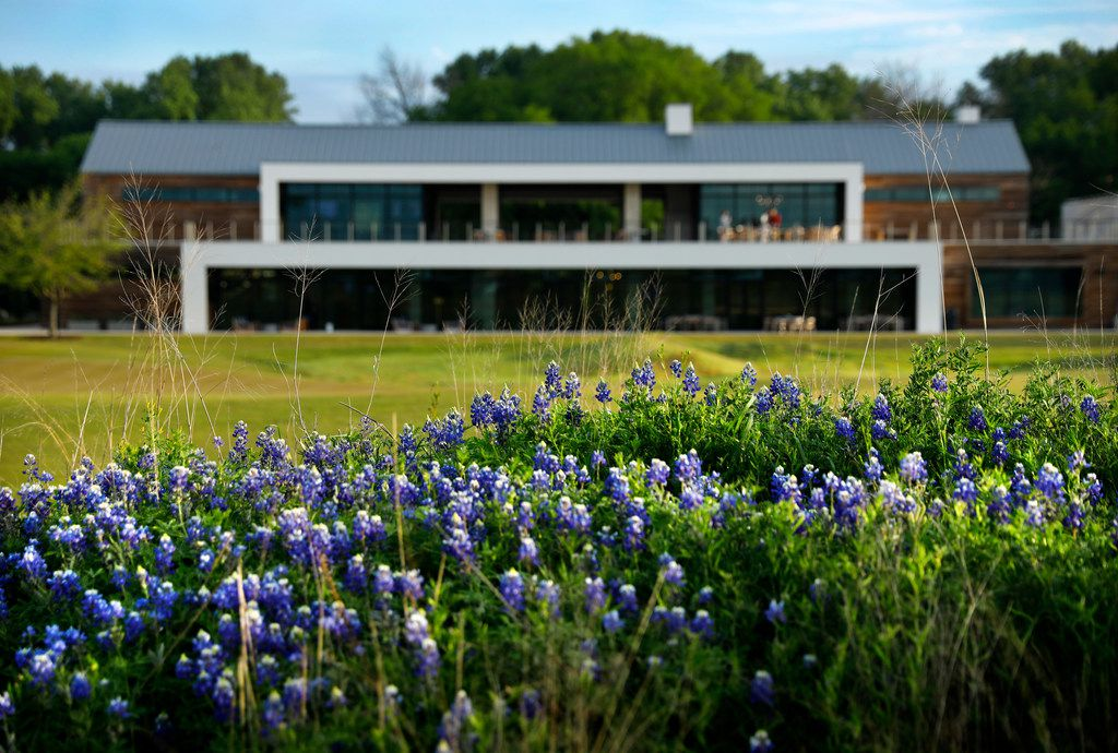 Bluebonnets bloom before the clubhouse at the new Trinity Forest Golf Club in Dallas Monday, April 23, 2018. The course is the new home of the Byron Nelson golf tournament. (Tom Fox/The Dallas Morning News)