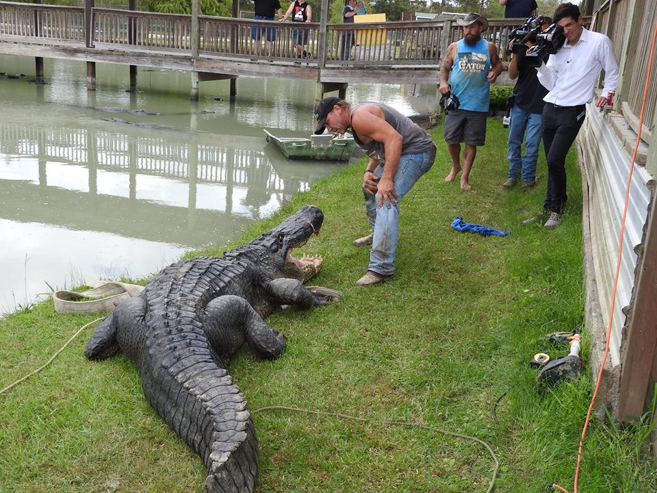 Gary Suarage, co-owner of Gator Country, stands next to what may be the largest alligator ever captured alive in Texas.