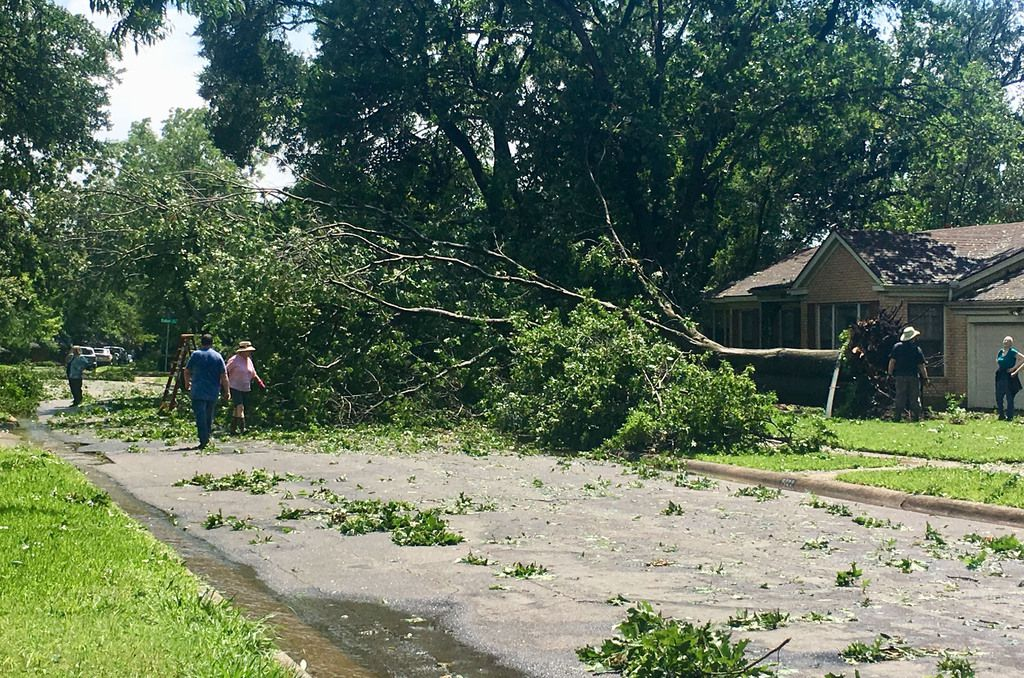 Un árbol sacado de raíz tras la tormenta en el área de White Rock Lake. DMN