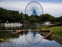 The Texas Star Ferris wheel towers over Leonhardt Lagoon where the swan boats are at Fair Park on Tuesday, June 18, 2019. (Ashley Landis/The Dallas Morning News)