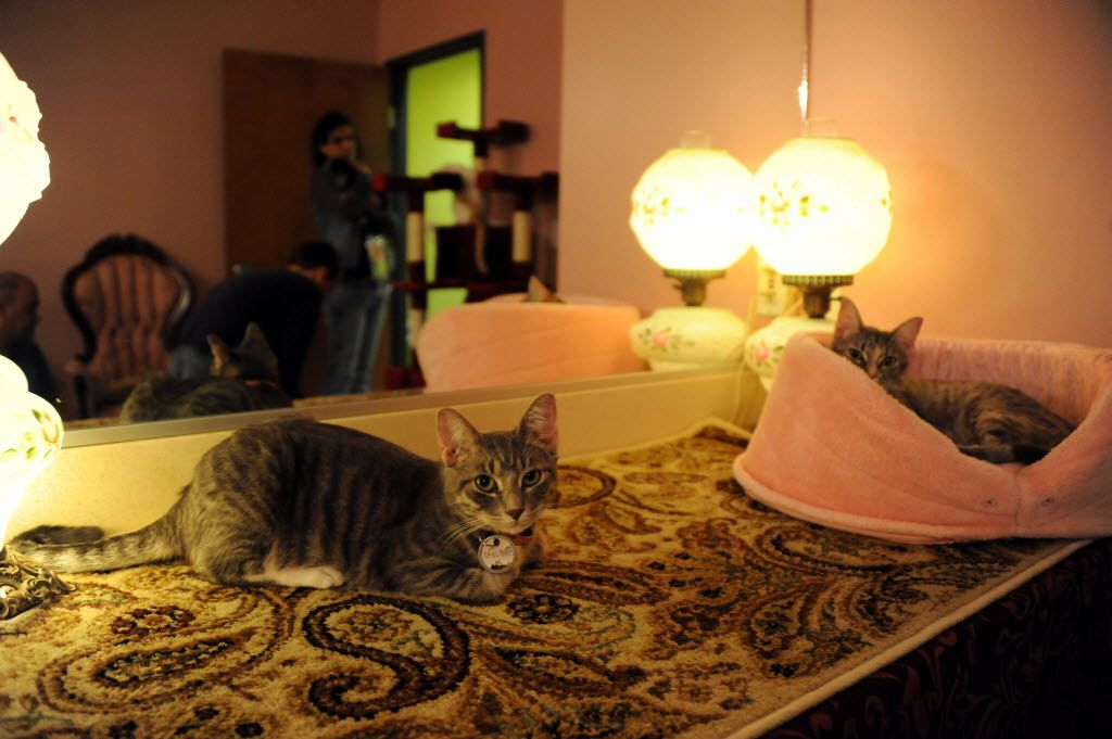 Cats relax while guests come to greet them at The Charming Cat Corner.