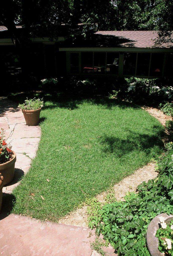 Reveille turfgrass, a cross of Kentucky bluegrass and Texas native bluegrass, is known to grow better in shade.