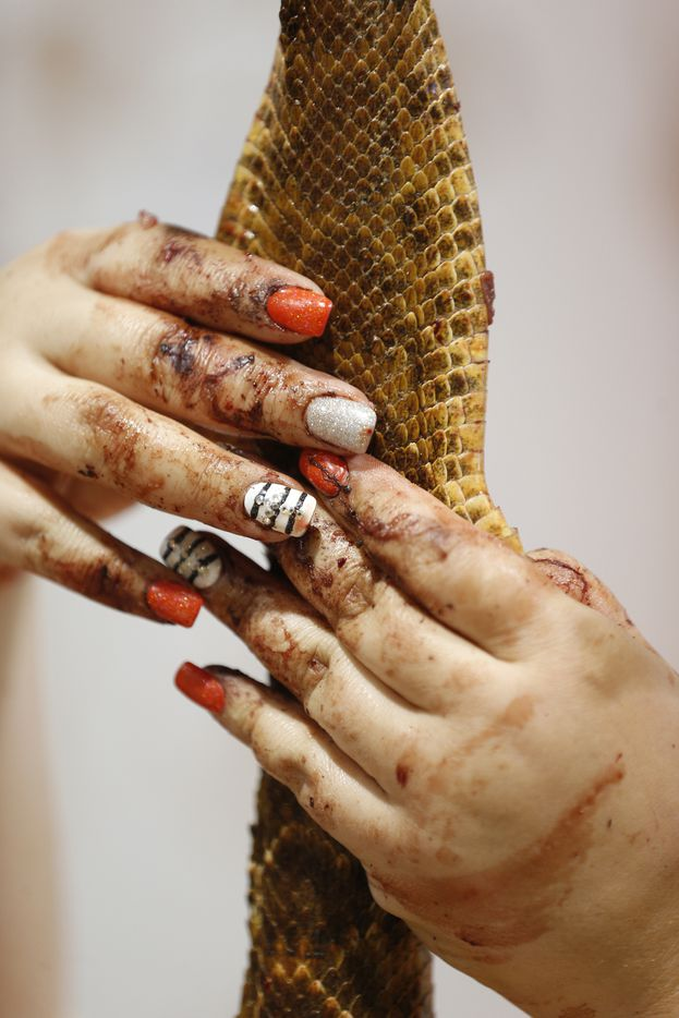 Junior Jaycee Ashley Torres pulled the skin off of a rattlesnake in the skinning pit. (Nathan Hunsinger/The Dallas Morning News)