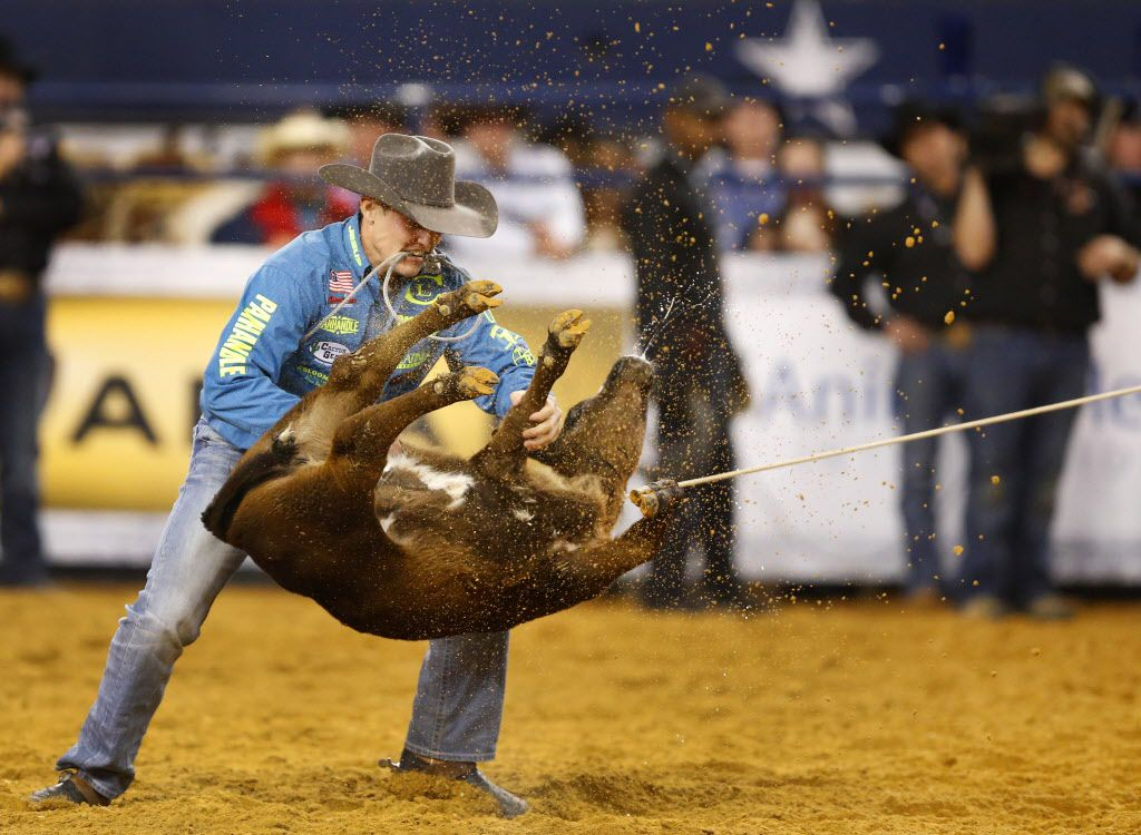 Tie-down roper Tuf Cooper, of Decatur, flips a calf before wrapping him up during the American Rodeo qualifying at AT&T Stadium in Arlington in 2015. Cooper is currently the world all-around leader with over $111,000 in prize money.