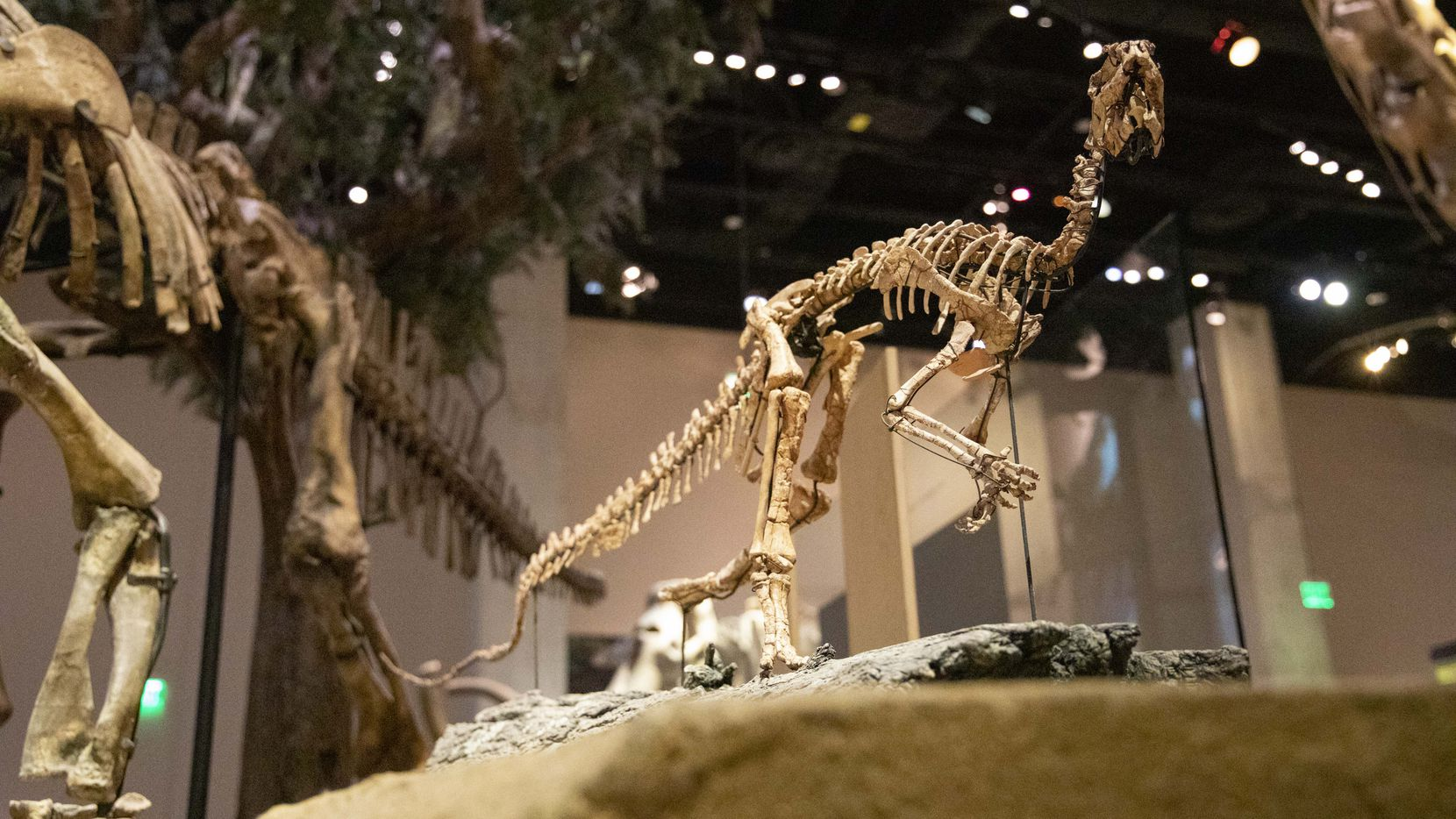 A livestream of entertaining education on dinosaurs will be featured at the April 24 virtual event.