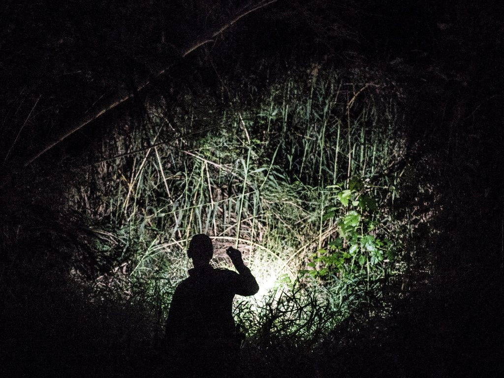 Border Patrol agent Emmanuel Santos searches for illegal immigrants trying to hide in the undergrowth along the Rio Grande border near Laredo, Texas, on Thursday.