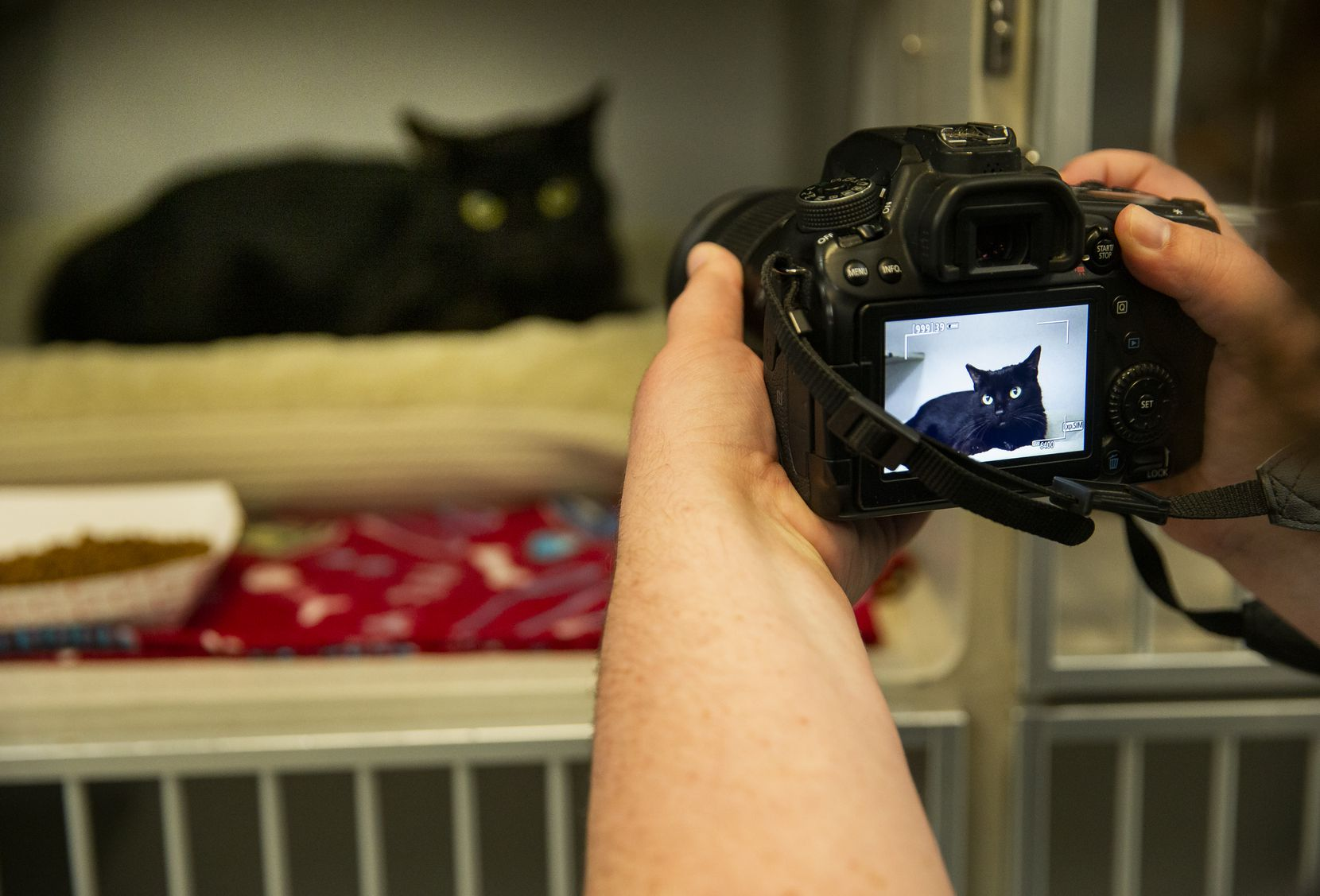 A Dallas Animal Services staff member photographed a cat last spring for posting on the department's social media and adoption pages. No formal talks have begun regarding reopening the shelter to in-person visits, but outgoing director Ed Jamison expects those discussions to begin in coming weeks.