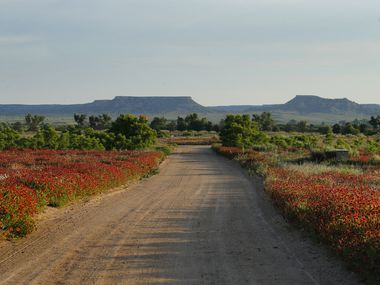 Indian paintbrush and sunflowers line pathways around The Lodge at Dallas businessman and philanthropist T. Boone Pickens' 65,000-acre Mesa Vista Ranch along the Canadian River in Roberts County.