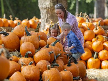 Heather Torregrossa from Frisco and her children, Emerson, 5, and Lennon, 3, look at pumpkins in the Dallas Arboretum's Pumpkin Village on Sept. 18, 2020 in Dallas.