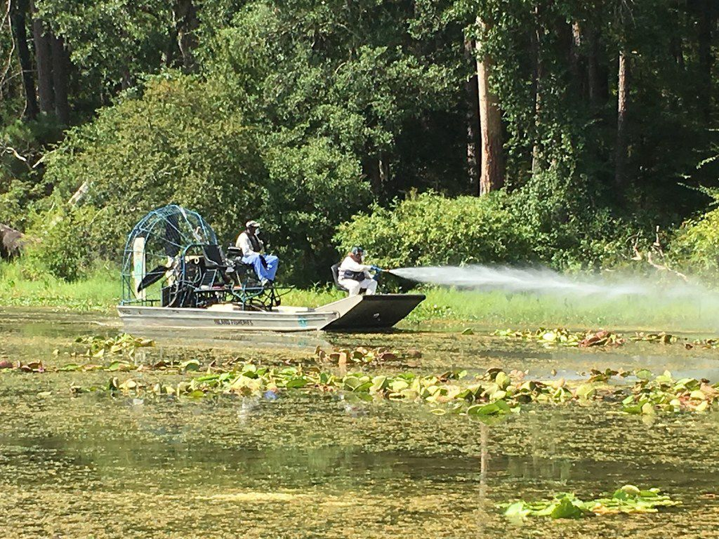 TPWD's Aquatic Habitat Enhancement Team applies herbicide to a giant salvina infestation on a Texas lake.