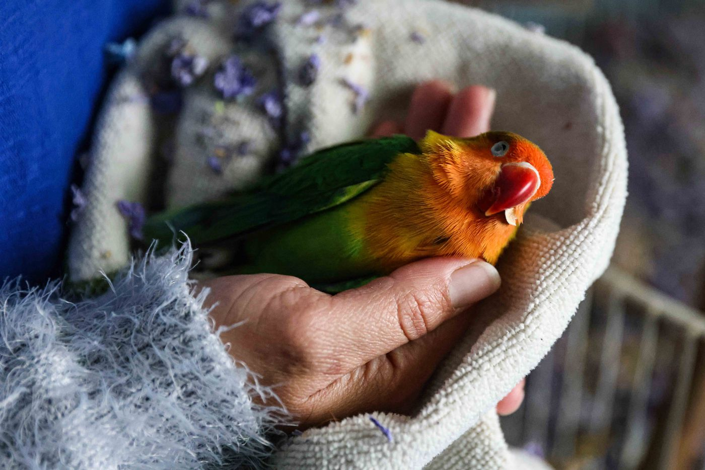 Marleny Almendarez, 38, holds their pet bird, Little Rainbow, who appeared dead after temperatures dropped in their home following snowstorm Uri. Almendarez decided to spend Tuesday night with her two children, one of them on the spectrum, in a bus that the city has provided as a warming center at Pleasant Oaks Recreation Center in Dallas on Wednesday, February 18, 2021.