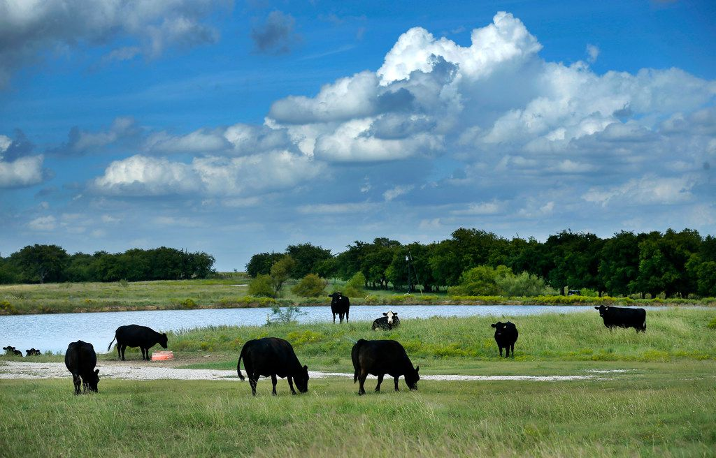 This stock pond for cattle will be excluded from development of Northstar's 2,200 homes on farmland in northwest Tarrant County.
