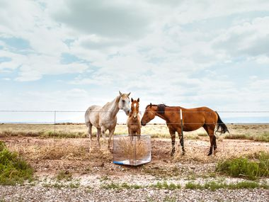 "Three horses stand while inspecting a glass-enclosed tumbleweed in the Chihuahuan Desert. ""Operation Tumbleweed"" includes 4 films. The excerpt available in this story is from a 45 min. film shoot on the Rio Grande."