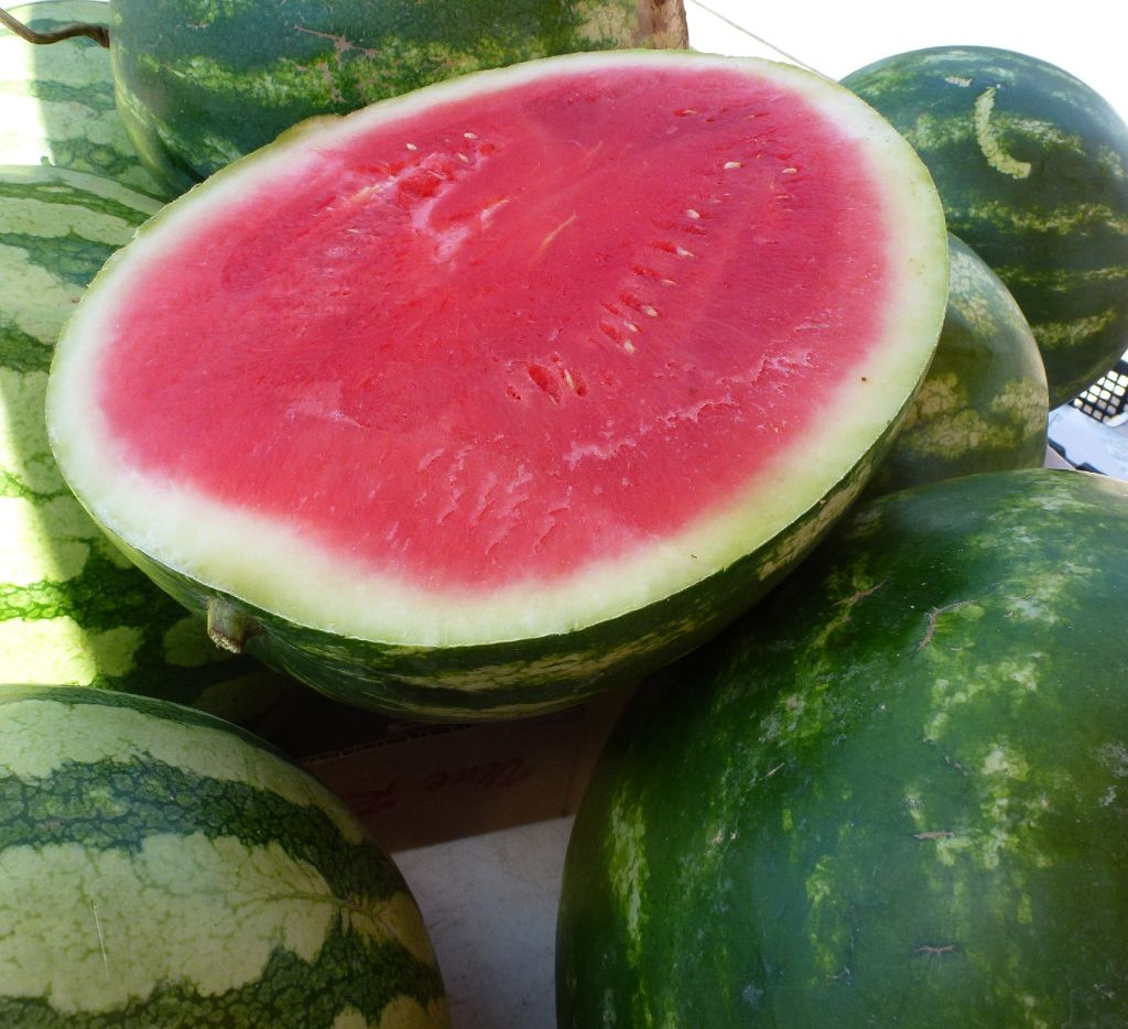 Texas watermelon, both local and from the Rio Grande Valley, is ripe, sweet and ready for the July 4th holiday, at Plano Farmers Market.