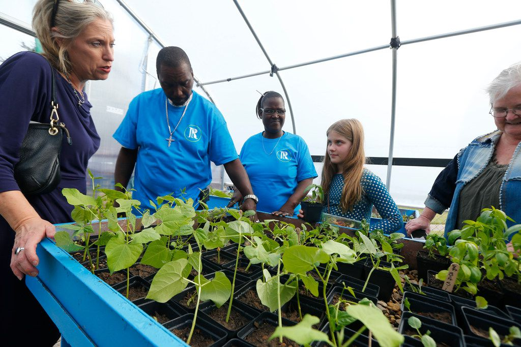 Suzanne Massey (from left), Charles Bryant, Anzinette Carter, Harper Massey, 11, and Susan Blackburn talk around plants in the greenhouse during the opening of MLK Jr. Freedom Garden and Seedling Farm in Dallas on Nov. 21, 2017.