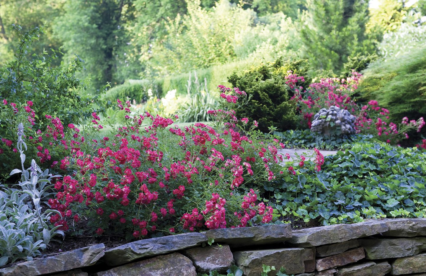 What Can You Plant After Rose Rosette Disease